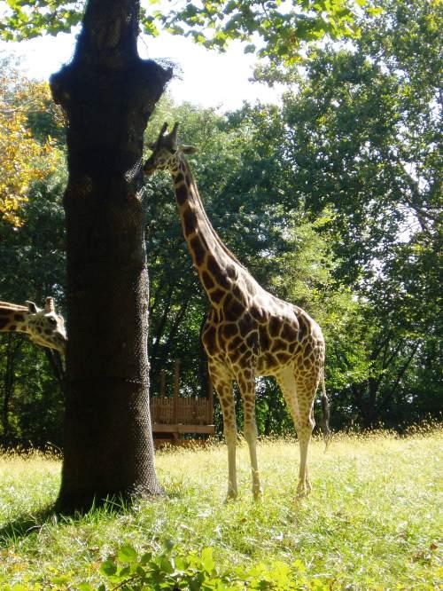 Bronx Zoo the Weekend